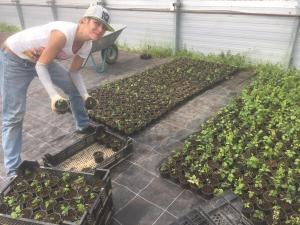 Bild von Corinna K. mit den (noch) kleinen Hopfenpflanzen.