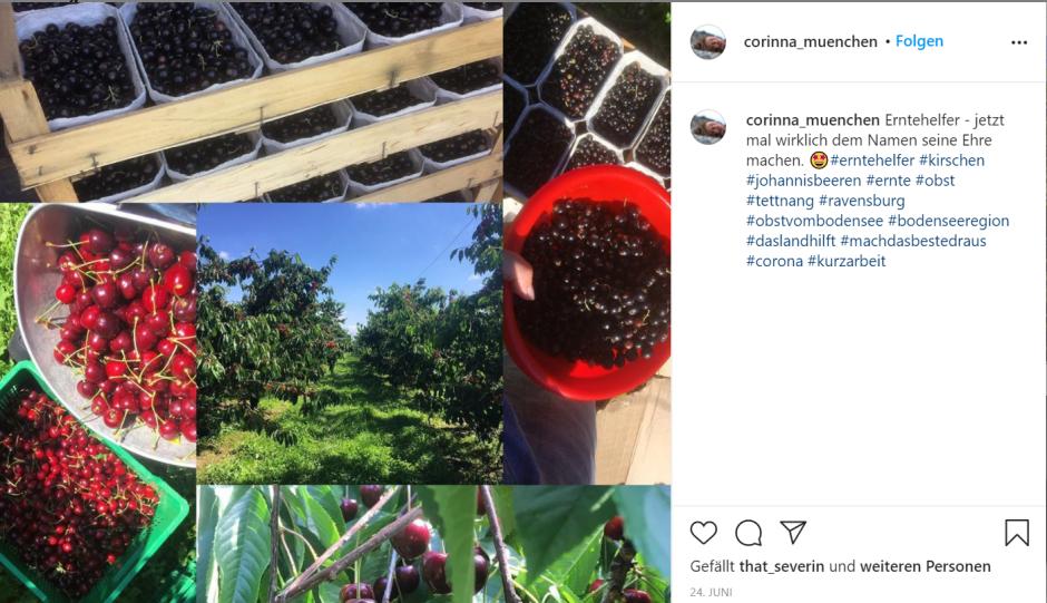 Ein Screenshot von Corinnas Instagram-Post zur Ernte.